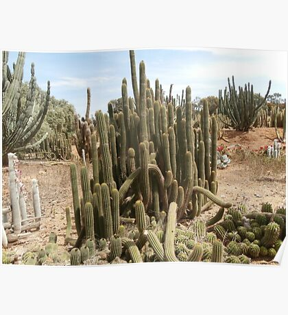 Cactus spike Poster