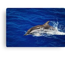 A wild free dolphin jumping  Canvas Print