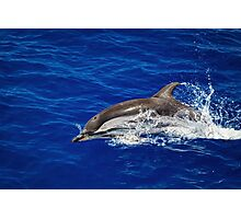 A wild free dolphin jumping  Photographic Print
