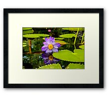 Water Lilly reflected in the water Framed Print