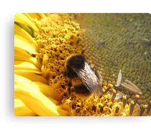 Bumble bee on sunflower Metal Print