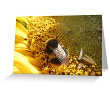 Bumble bee on sunflower Greeting Card