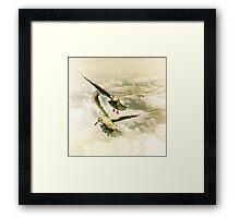 Two gulls Framed Print