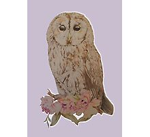 Owl and Flowers Photographic Print