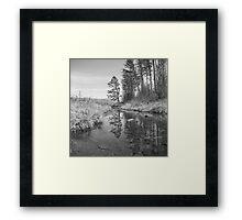 Tree Along the Creek Framed Print