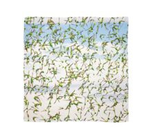 Budgerigar Series-Scarf No.5 Scarf