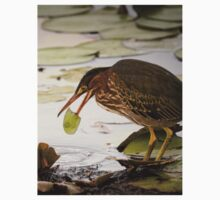 Crowned Night Heron (Hammond Pond, MA) -2 One Piece - Short Sleeve