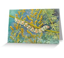 Cucullia Absinthii Caterpillar Greeting Card