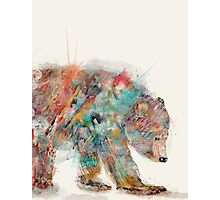 into the wild grizzly bear Photographic Print