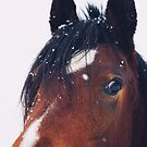 Stormy by ALICIABOCK