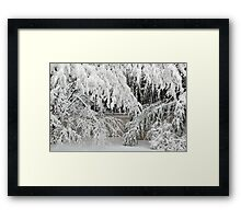 Weeping Bamboo Framed Print