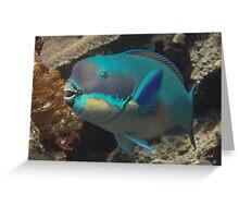 Steephead Parrotfish Greeting Card