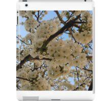 ash-841 iPad Case/Skin