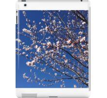 ash-844 iPad Case/Skin