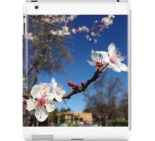 ash-845 iPad Case/Skin
