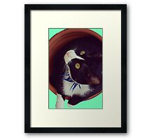 Eyes cat panzon green bicolor feline Framed Print