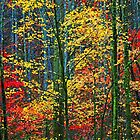 FOREST SPLENDOR by Chuck Wickham