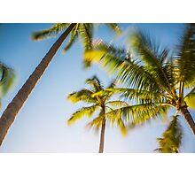 Tropical Hawaiian Palm Paradise Photographic Print