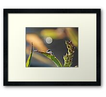 NS Small Worlds III© Framed Print
