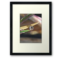 NS Small Worlds IV© Framed Print