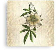 Antique Botanical 2 Canvas Print