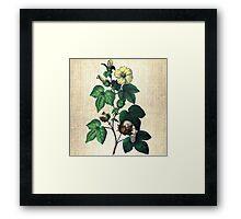 Antique Botanical 3 Framed Print