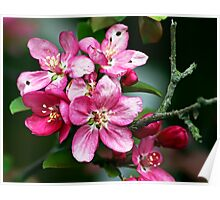 Flowers - crabapple blossoms (2010) Poster
