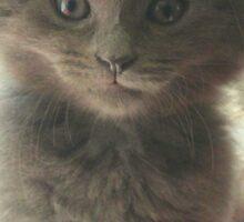 Sweet Fluffy Grey Kitten Sticker