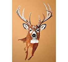 White-tailed Deer Buck by Dennis Dalton Photographic Print