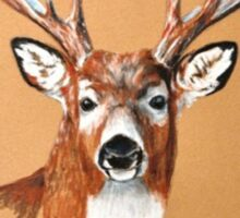 White-tailed Deer Buck by Dennis Dalton Sticker