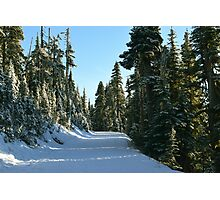 Hurricane Ridge Road, Olympic National Park, Washington Photographic Print