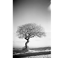 Tree, Waseley Hills Park Photographic Print