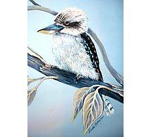 Cool Kookaburra Photographic Print