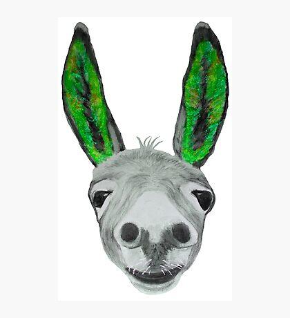 Funny donkey (green) Photographic Print