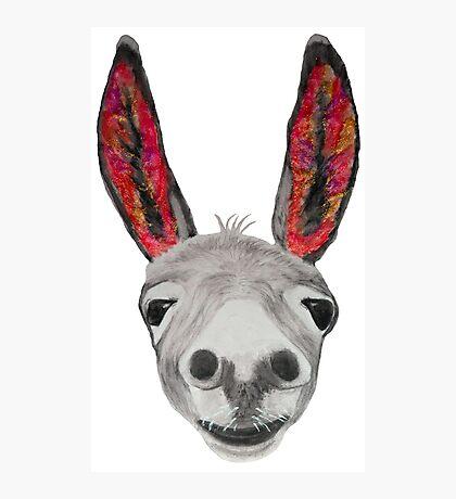 Funny donkey (red/orange) Photographic Print