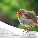 Round robin by Arie Koene