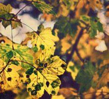 Golden Leaves Sticker