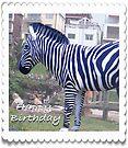 Happy Birthday Zebra by KazM