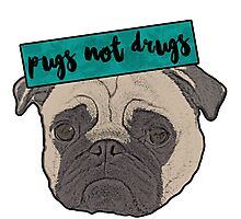 Pugs  Photographic Print
