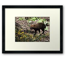 Smilin' Jack (Bush Dog) Framed Print
