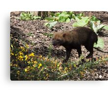 Smilin' Jack (Bush Dog) Canvas Print