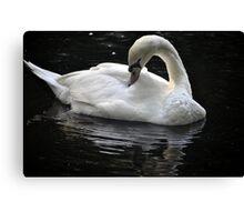 Bright White Swan Canvas Print