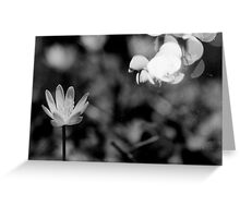 Macro Flower Black and White Greeting Card