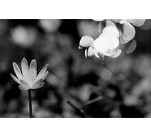 Macro Flower Black and White Photographic Print