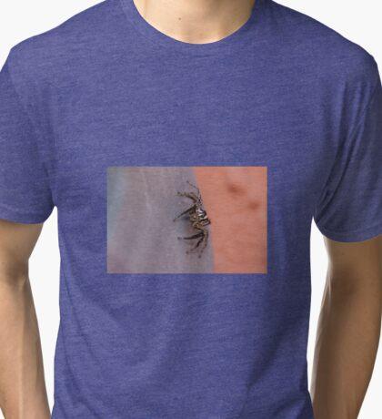 Plexippus paykulli Tri-blend T-Shirt