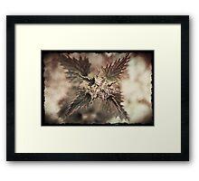 Sting! Framed Print