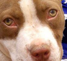 American pitbull Terrier puppy Sticker
