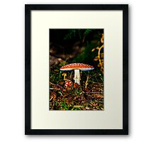 Big mushroom little mushroom Framed Print