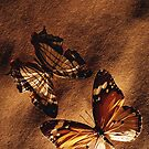 ~ Butterflies ~ by Alexandra  Lexx
