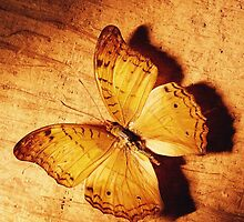 ~ Butterfly ~ by Alexandra  Lexx